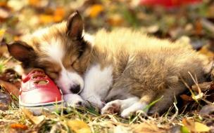 Fondo de pantalla perro durmiendo en un zapato