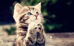 Fondo de pantalla gatito orando