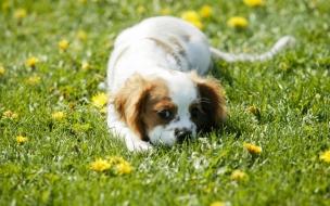 Fondo de pantalla perro entre flores