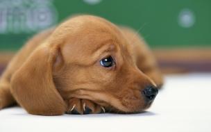 Fondo de pantalla perro esperando