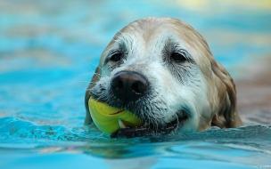 Fondo de pantalla perro nadando