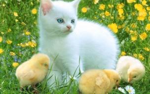 Fondo de pantalla gato y pollitos