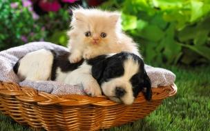 Fondo de pantalla perro y gato en cesta