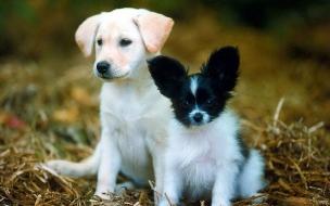 Fondo de pantalla perros abandonados