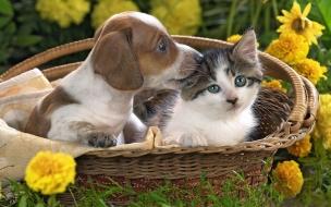 Fondo de pantalla perro y gato en canasta