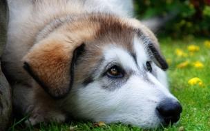 Fondo de pantalla perro triste