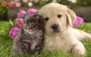 Fondo de pantalla perro y gato juntos