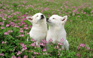 Fondo de pantalla perros acariciandose en jardin