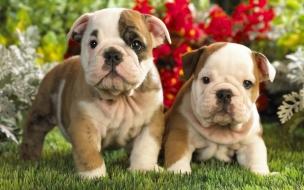 Fondo de pantalla perros bebes mirando