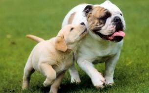 Fondo de pantalla perros corriendo en jardin