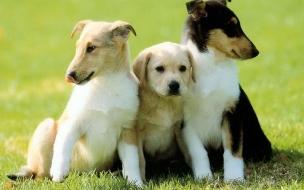 Fondo de pantalla perros amigos
