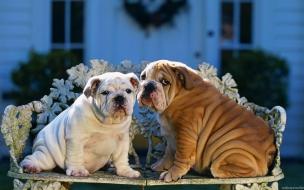 Fondo de pantalla perros en sillon