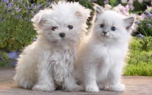 Fondo de pantalla perros blancos tiernos