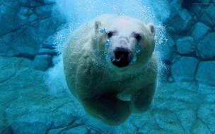 Fondo de pantalla oso polar en el agua mirando
