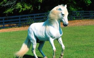 Fondo de pantalla caballo blanco en potrero