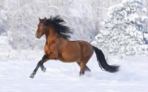 Fondo de pantalla caballo corriendo en la nieve