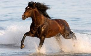 Fondo de pantalla caballo en el mar