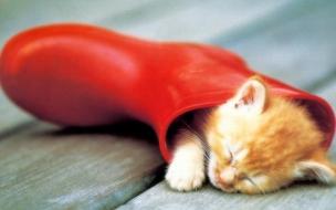 Fondo de pantalla gato dormido en una bota