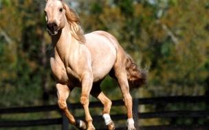 Fondo de pantalla caballo solitario