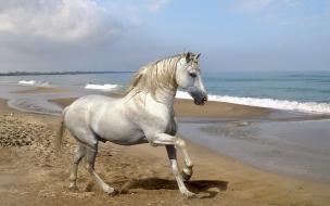 Fondo de pantalla caballo blanco en la orilla