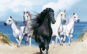 Fondo de pantalla caballos corriendo cerca de la playa