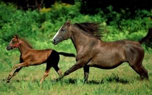 Fondo de pantalla caballos corriendo en campo
