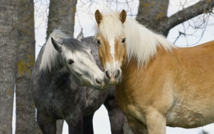 Fondo de pantalla caballos enamorados