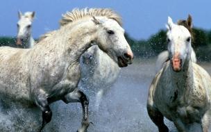 Fondo de pantalla caballos jugando
