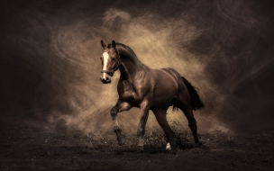 Horse animal wallpaper