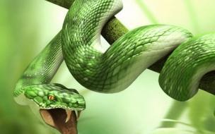 Fondo de pantalla serpiente mordiendo