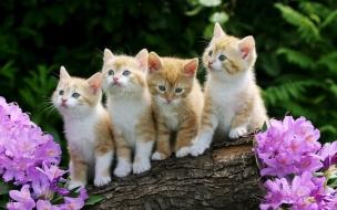 Fondo de pantalla gatitos unidos