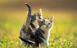 Fondo de pantalla gatitos ansiosos