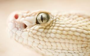 Fondo de pantalla ojo de serpiente blanca