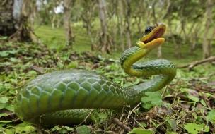 Fondo de pantalla serpiente verde