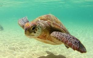 Fondo de pantalla tortuga marina