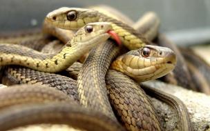 Fondo de pantalla serpientes