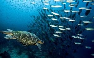 Fondo de pantalla tortuga con peces