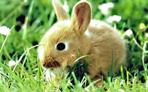 Fondo de pantalla conejo bebe comiendo