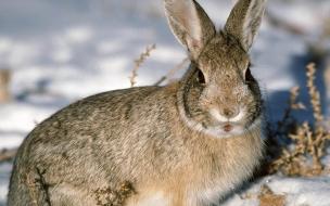 Fondo de pantalla conejo observando