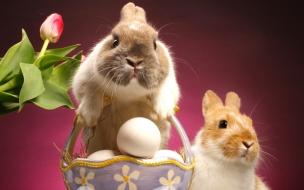 Fondo de pantalla conejo de pascua