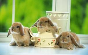 Fondo de pantalla conejos timidos