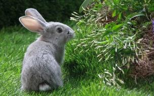 Fondo de pantalla conejo comiendo