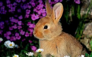 Fondo de pantalla conejo entre flores