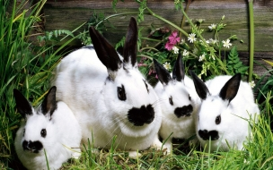 Fondo de pantalla conejos con boca negra