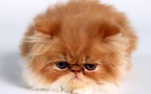 Fondo de pantalla gato acurrucado