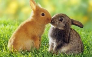 Fondo de pantalla conejos besandose