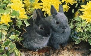 Fondo de pantalla conejos grises