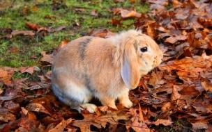Fondo de pantalla de conejo en otoño