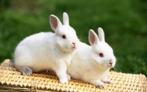 Fondo de pantalla conejos jugando