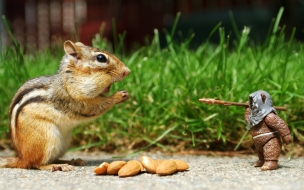Squirrel eating nuts animals wallpapers